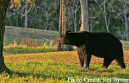 Bayou Teche Black Bear Festival Cajun Coast