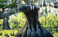 Bayou Swamp Tours on the Cajun Coast