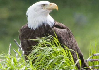 Eagle Expo Feb 26-27 (Boat Tours Only) Cajun Coast