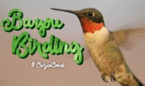 Bayou birding on the Cajun Coast