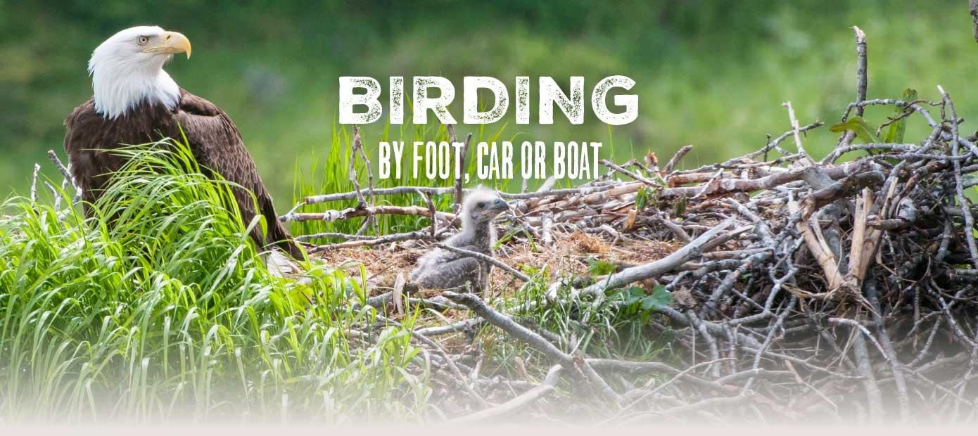 Louisiana's Cajun Coast - Birding by foot, car or boat.